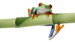 Bamboo plants frog | many different bamboo varieties