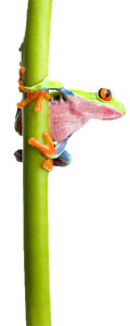 Bamboo plants Melbourne logo frog | buy bamboo plants