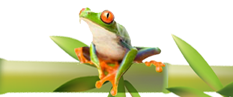 Melbourne Bamboo Creations Victoria frog logo