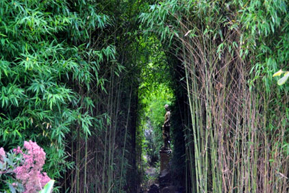 Image of bamboo garden with statue sculpture