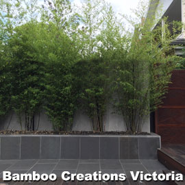 Black Bamboo in long planter box to block the neighbouring building.