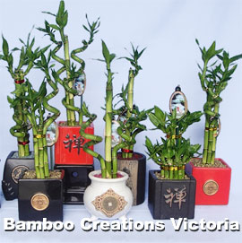 Lucky chinese Bamboo - E size
