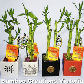 Lucky bamboo - chinese style or lucky chinese bamboo